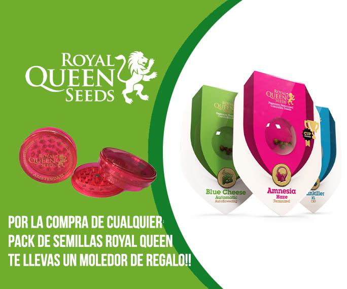 promociones de semillas royal queen