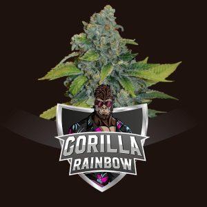 Gorilla Rainbow BSF Seeds
