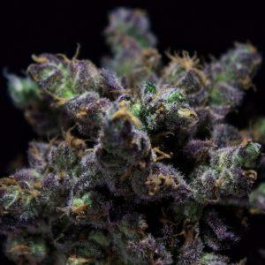 Harybo R-KiemFeminizada 3 Semillas de Marihuana